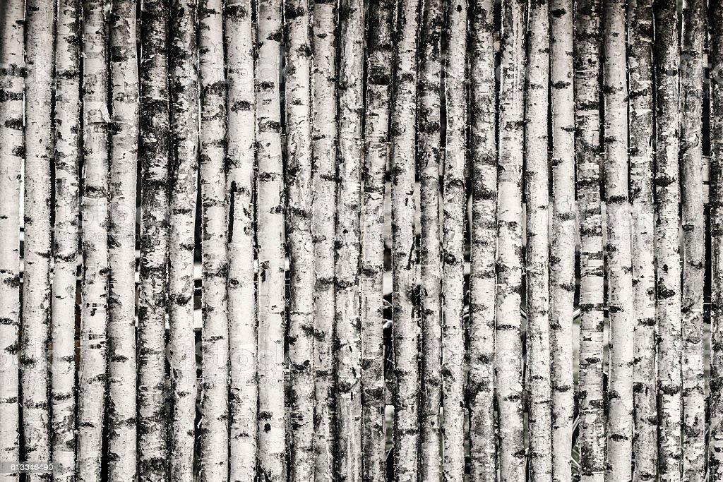 Birch Fence Background – Foto