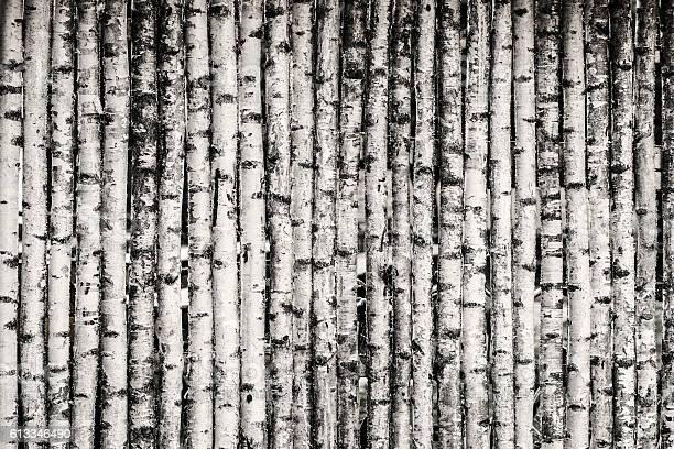 Photo of Birch Fence Background