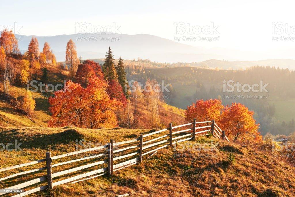 Birkenwald in sonnigen Nachmittag während der Herbstsaison. Herbst-Landschaft. Ukraine. – Foto