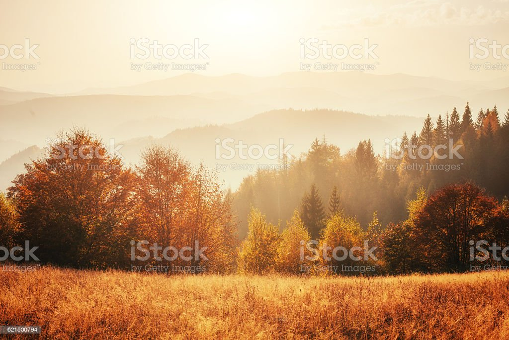 birch forest in sunny afternoon while autumn season. Lizenzfreies stock-foto