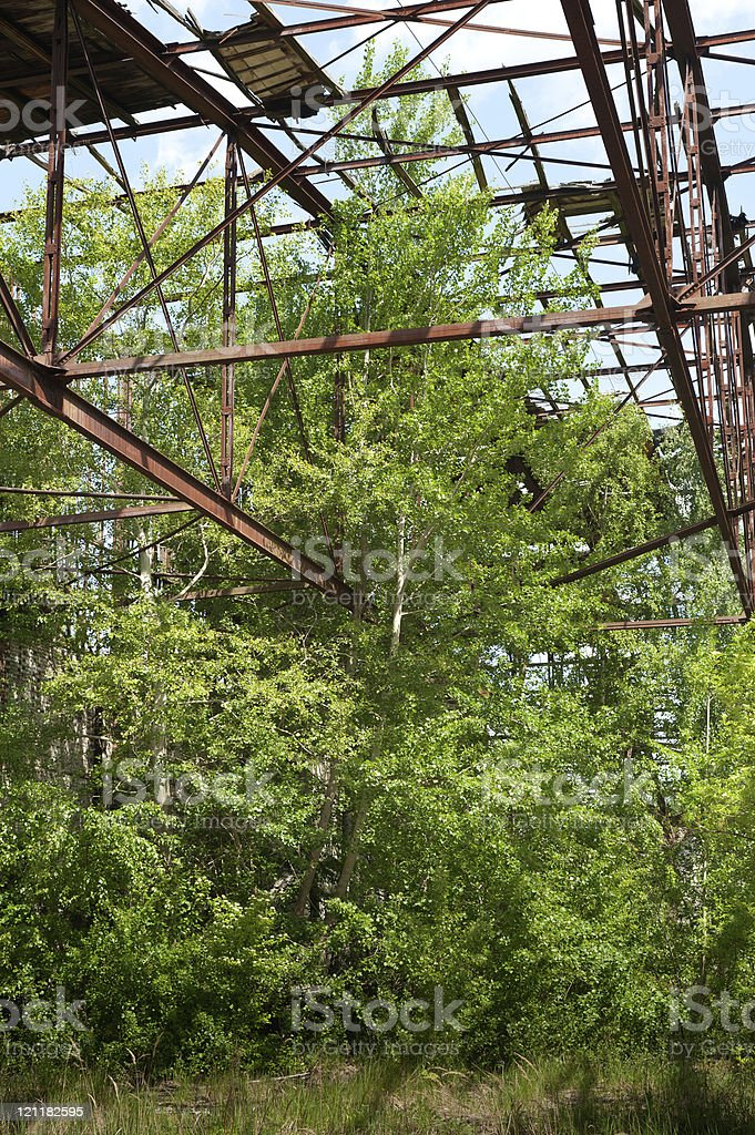 Birch grows in an old, abandoned hall stock photo