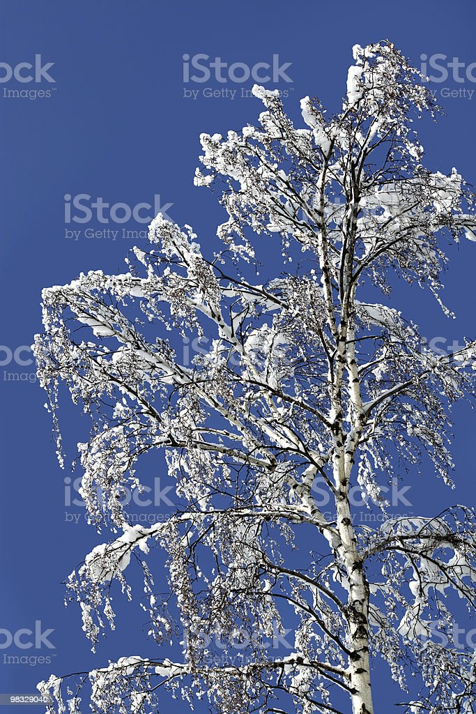 Birch in a snow royalty-free stock photo