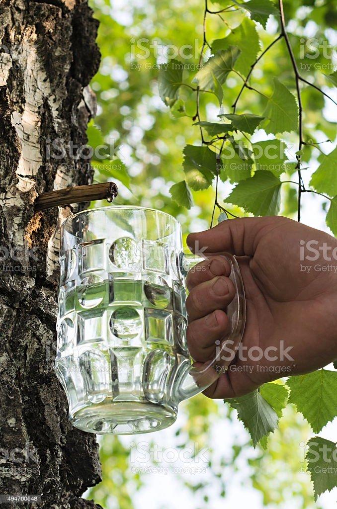 birch juice foto