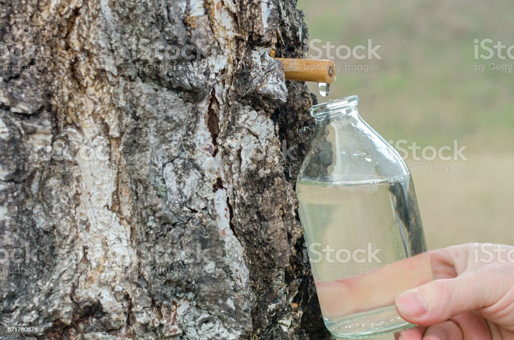 birch juice stock photo
