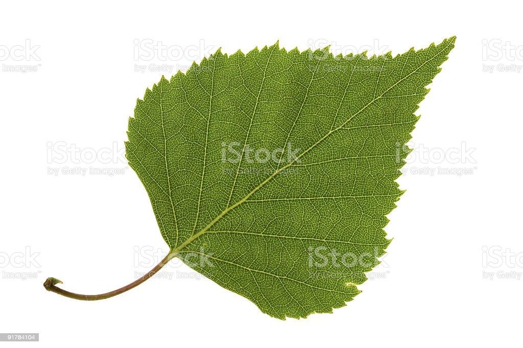 Birch leaf royalty-free stock photo