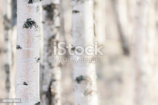 Close-up of birch in Finland