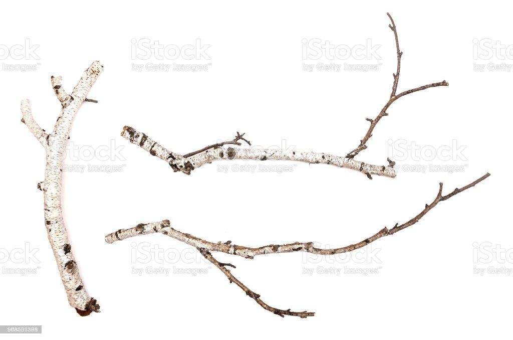 Birch. royalty-free stock photo