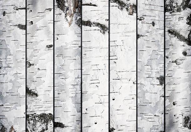 Birch Planks stock photo