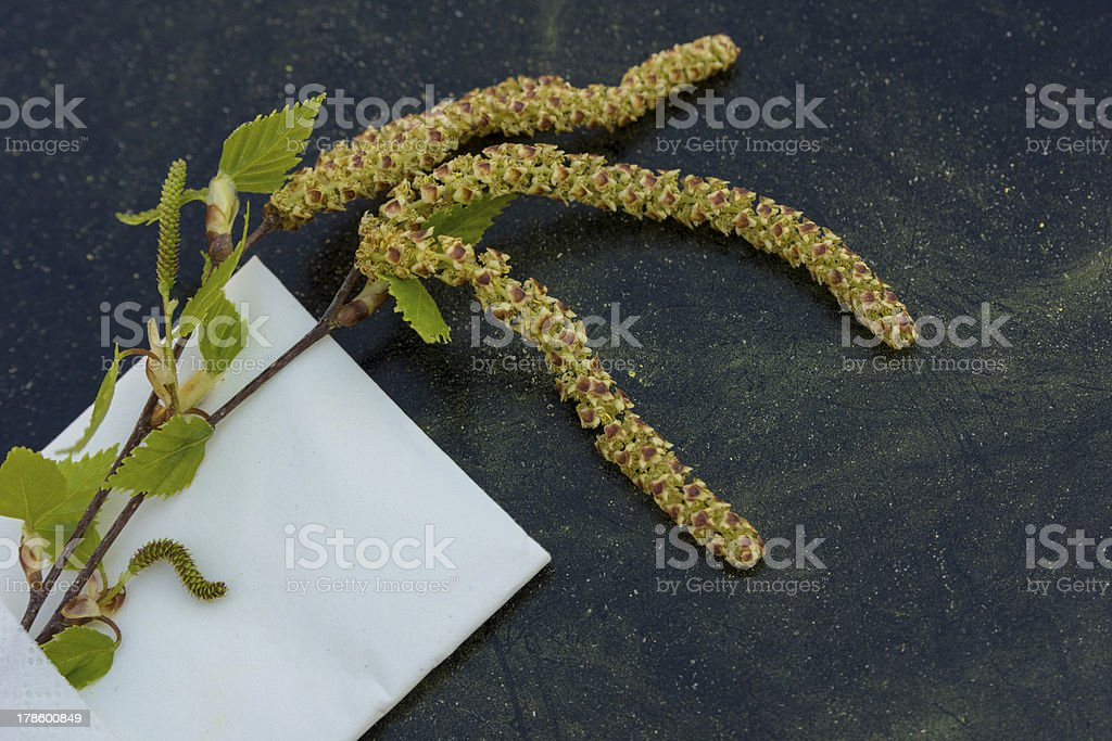 Birch pollen stock photo