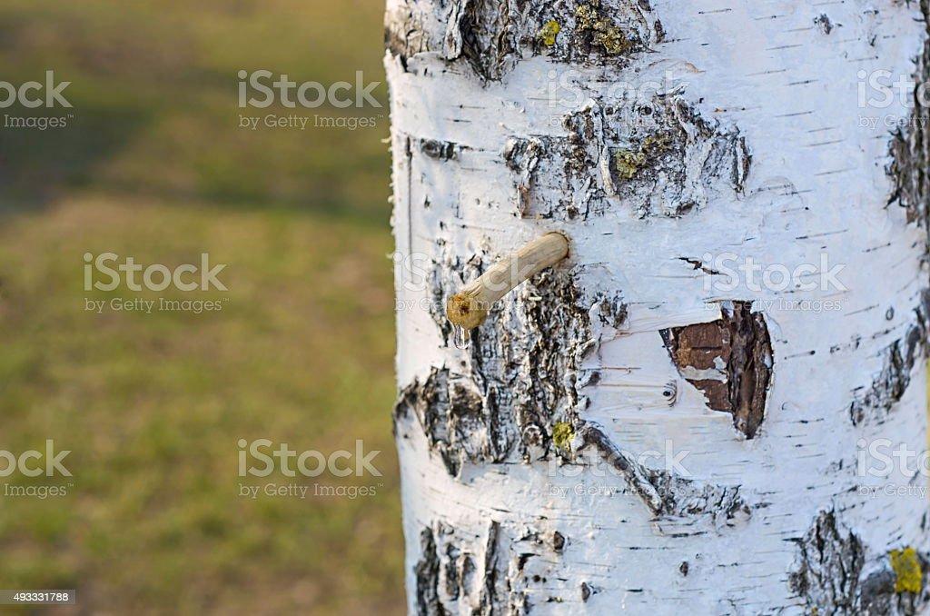birch sap foto