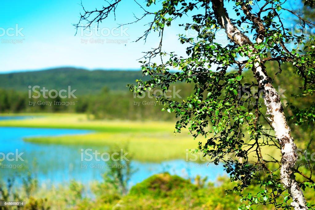 Birch tree bokeh  lake landscape backgroun stock photo