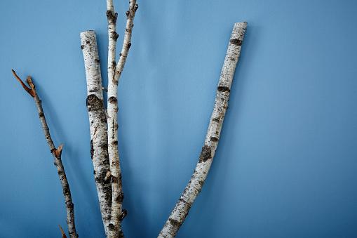 istock birch tree on blue wall modern interior design 656780650