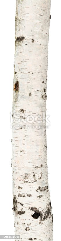 Trunk of a birch isolated on white background.