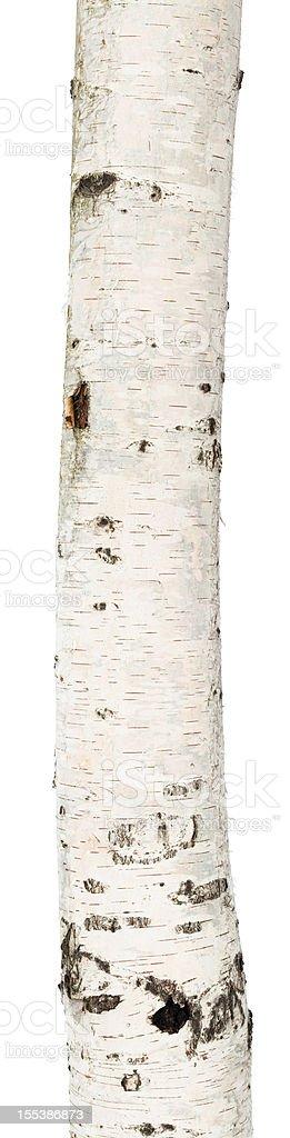 Isolierte birch trunk – Foto