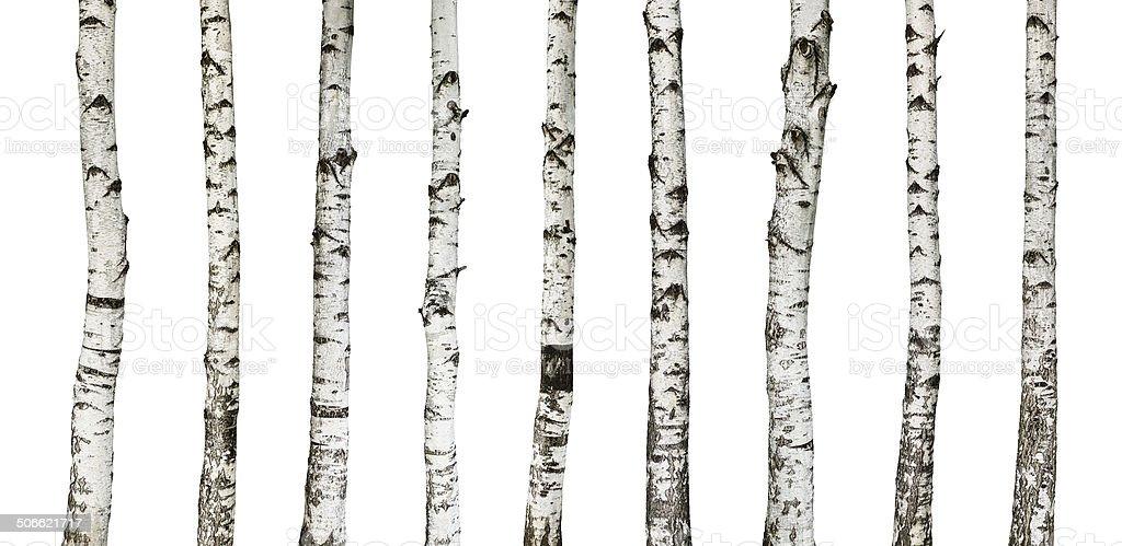 Birch Badehose, isoliert auf weiss – Foto