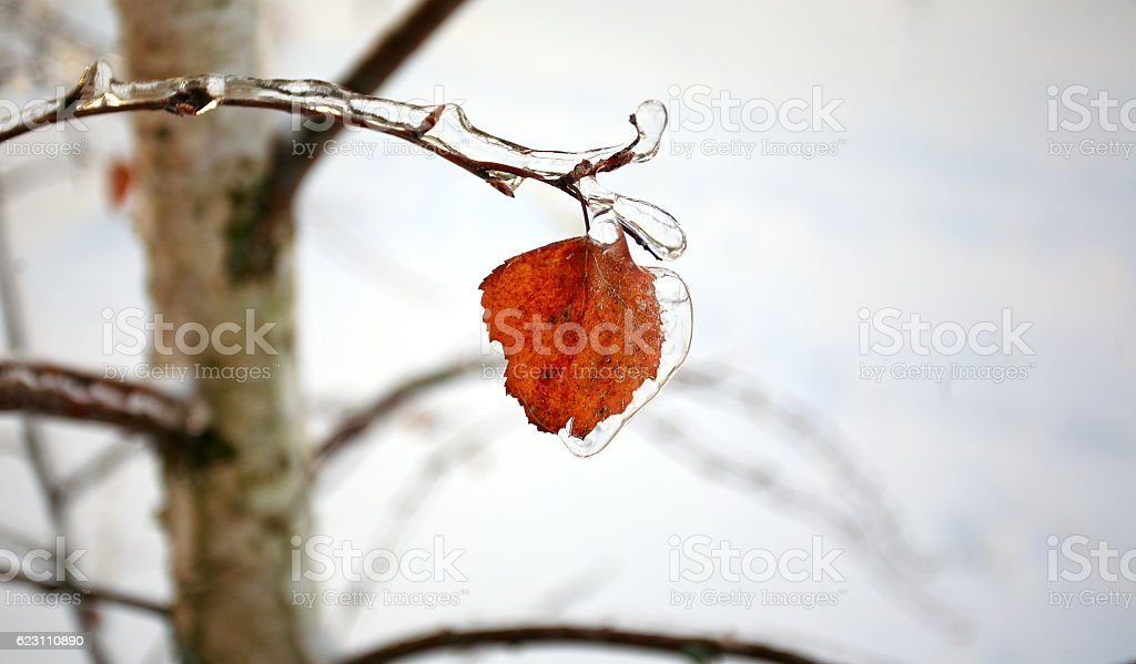 Birch yellow leaf under icy stock photo