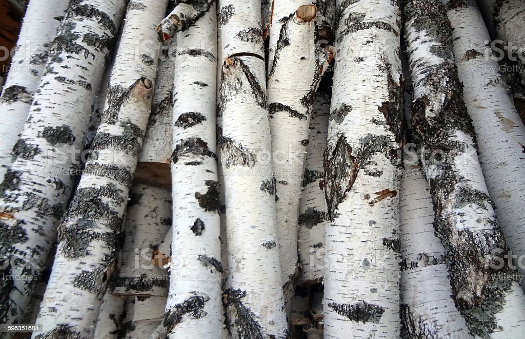 Birches sides royalty-free stock photo