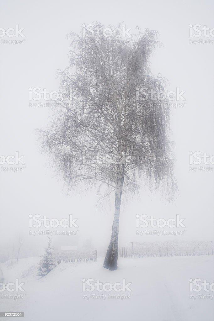 Birch-tree royalty-free stock photo