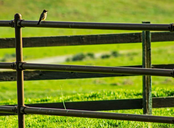 Bird 1 stock photo