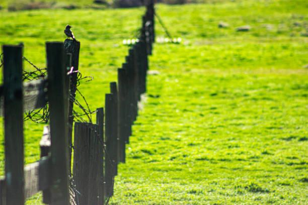 Bird 2 stock photo