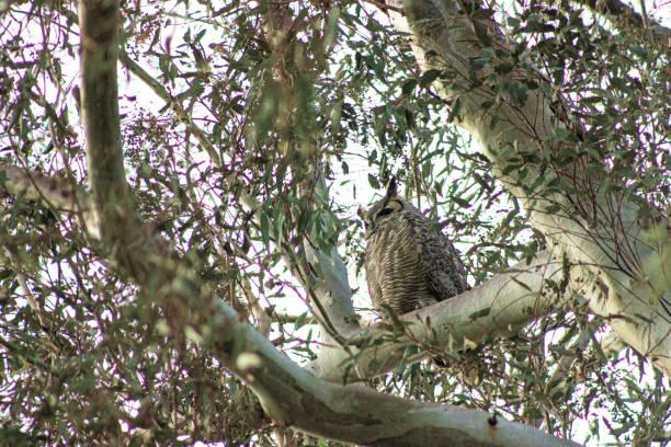 Bird 3 (Owl) stock photo