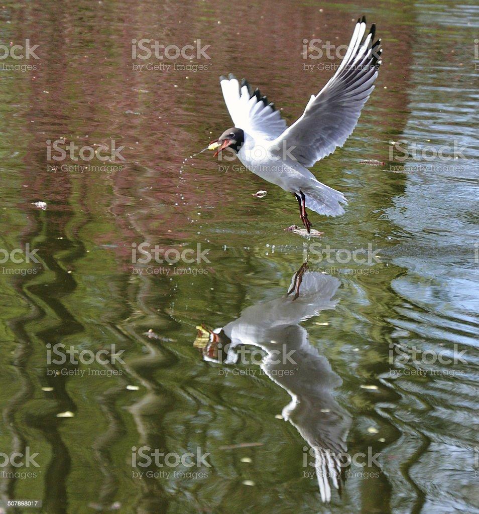 bird above the water stock photo