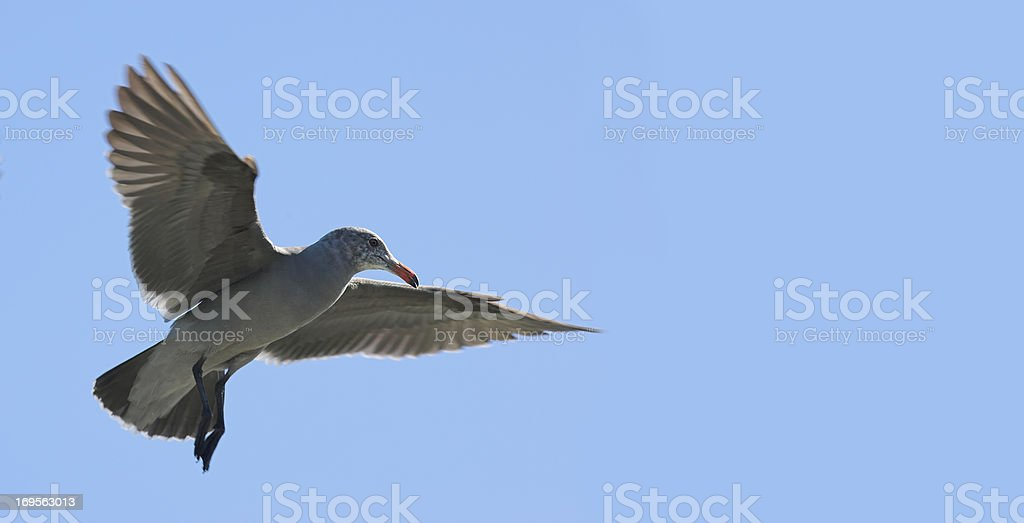 Bird against the blue stock photo