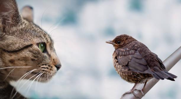 Bird and cat picture id646872700?b=1&k=6&m=646872700&s=612x612&w=0&h=77dxrwpyg72euln0ls nzyr8xv4mgqox3p tlcdgzss=