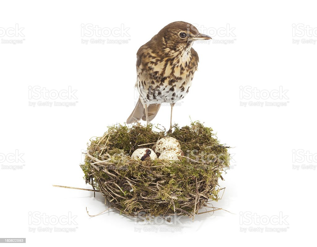 bird and nest stock photo