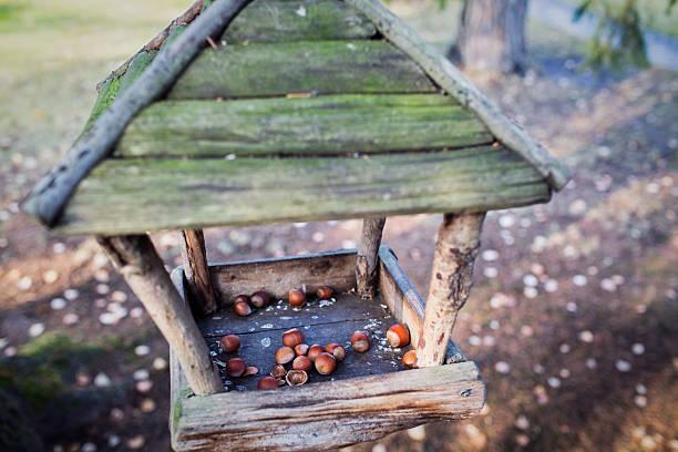 bird feeder mit nüssen und squirrel - meisenknödel stock-fotos und bilder