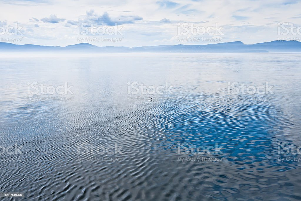 Bird and water royalty-free stock photo