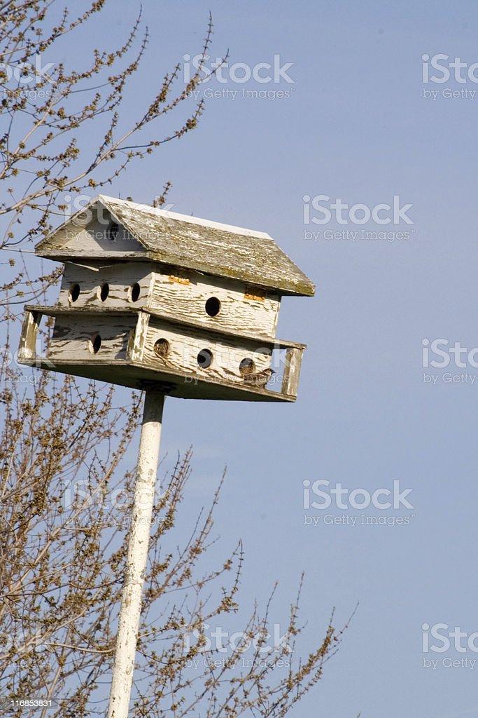 Bird apartment royalty-free stock photo