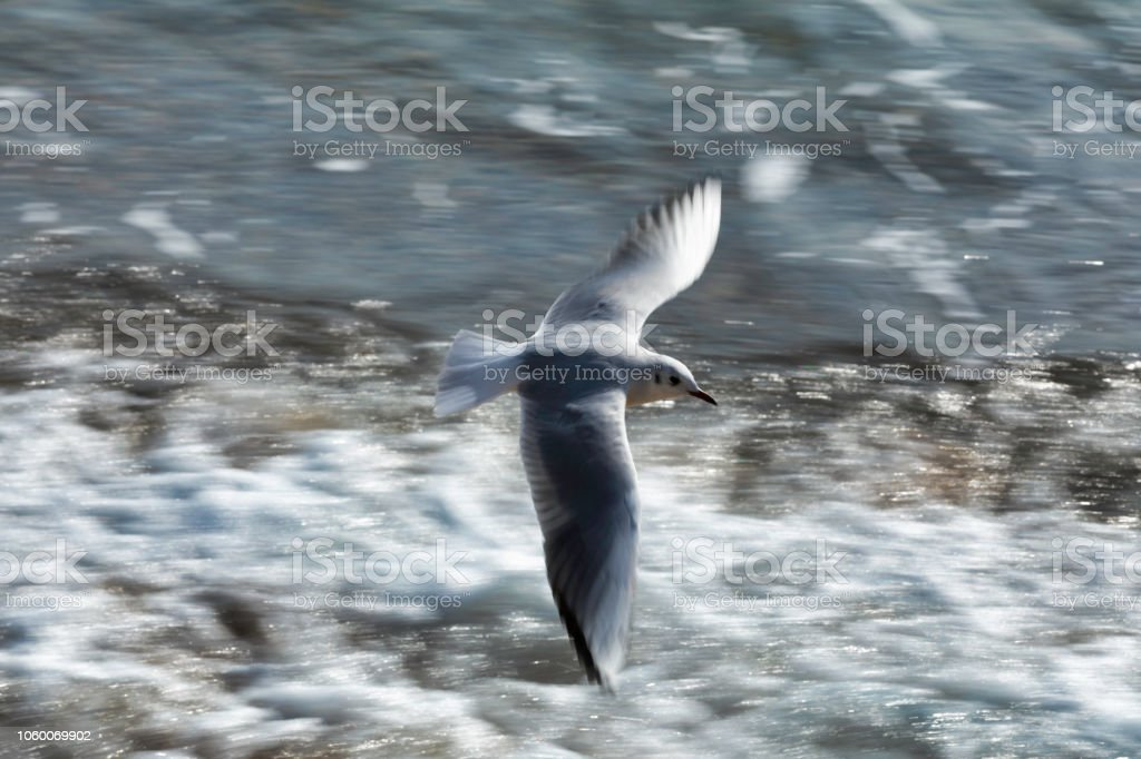 Bird are flying above the sea stock photo