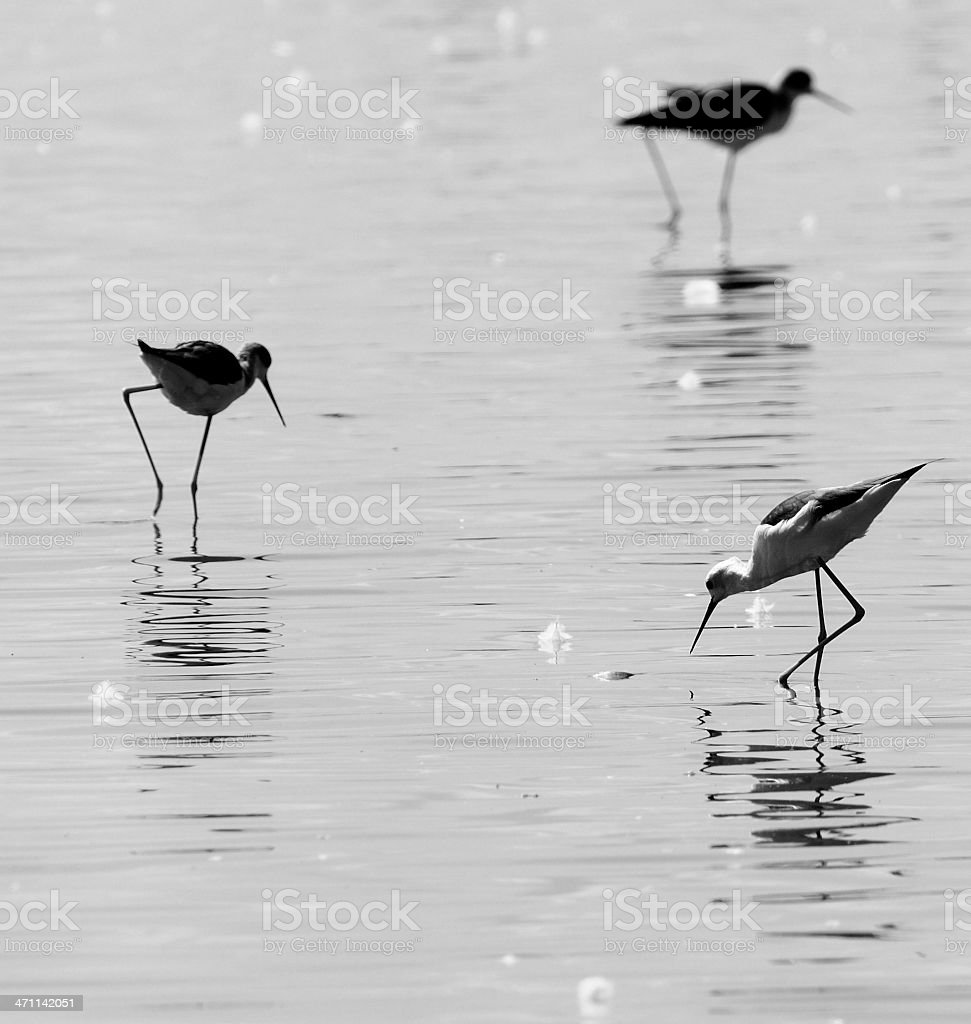 Bird Art royalty-free stock photo