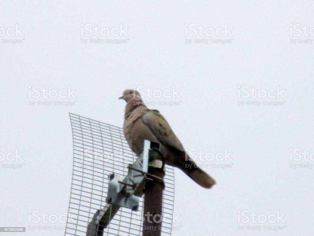 Bird at TV antenna stock photo