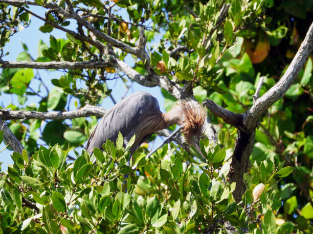 Bird atop the tree - Unknown Type stock photo