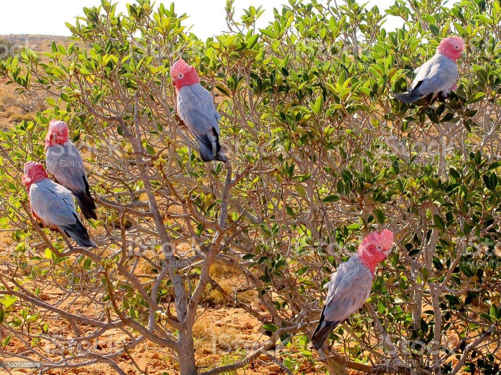 Bird, australia stock photo