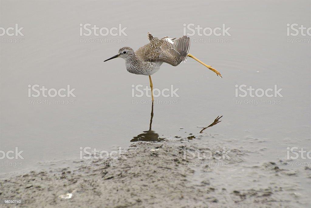 Bird balancing on one leg royalty-free stock photo