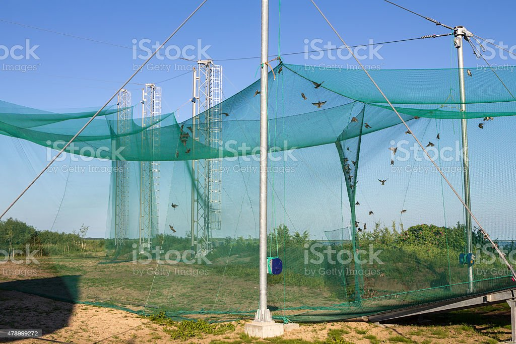 Bird banding station in Ventes Ragas, Lithuania, Europe stock photo