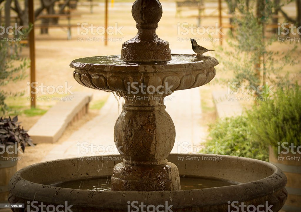 Bird Bathing in Garden Fountain stock photo