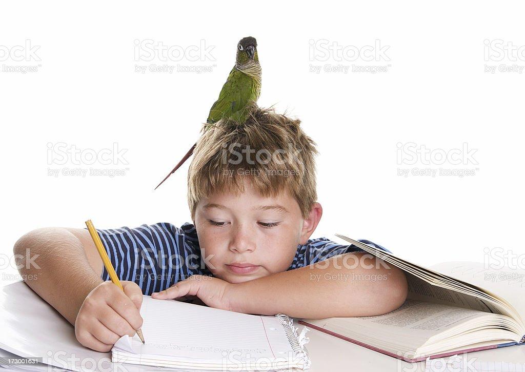 Bird Gehirn Lizenzfreies stock-foto