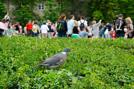 Bird by Notre-Dame de Paris with Tourists