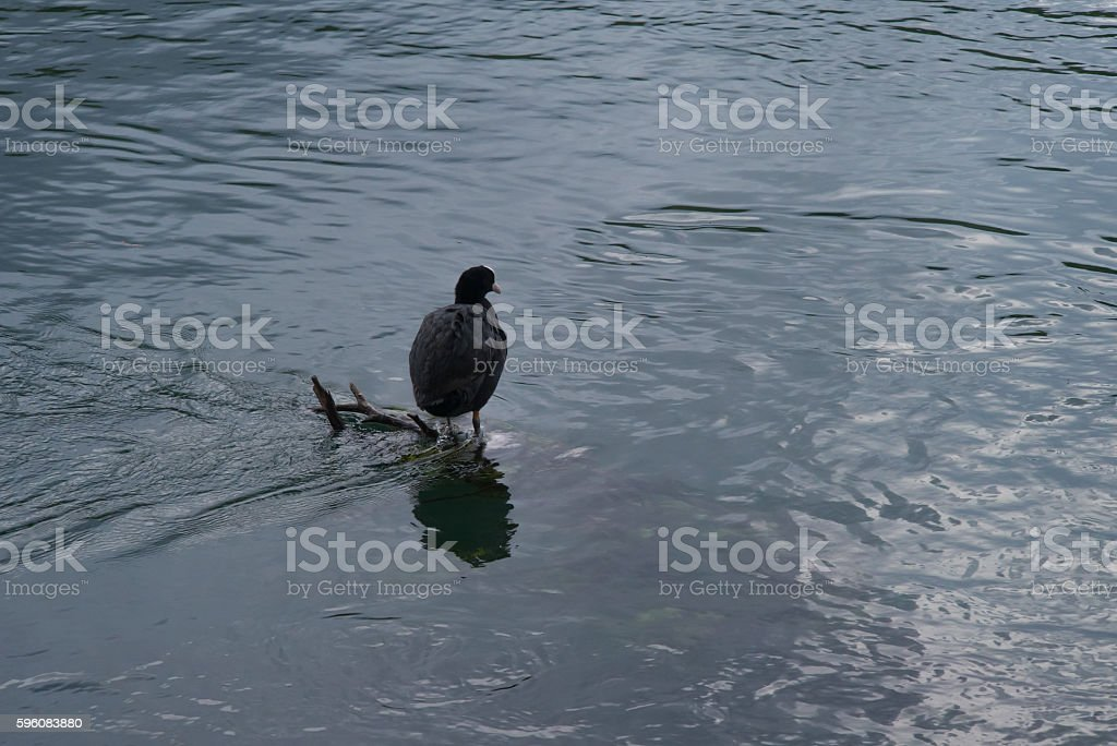 Bird by the Quiet Lake and Vegetation royalty-free stock photo
