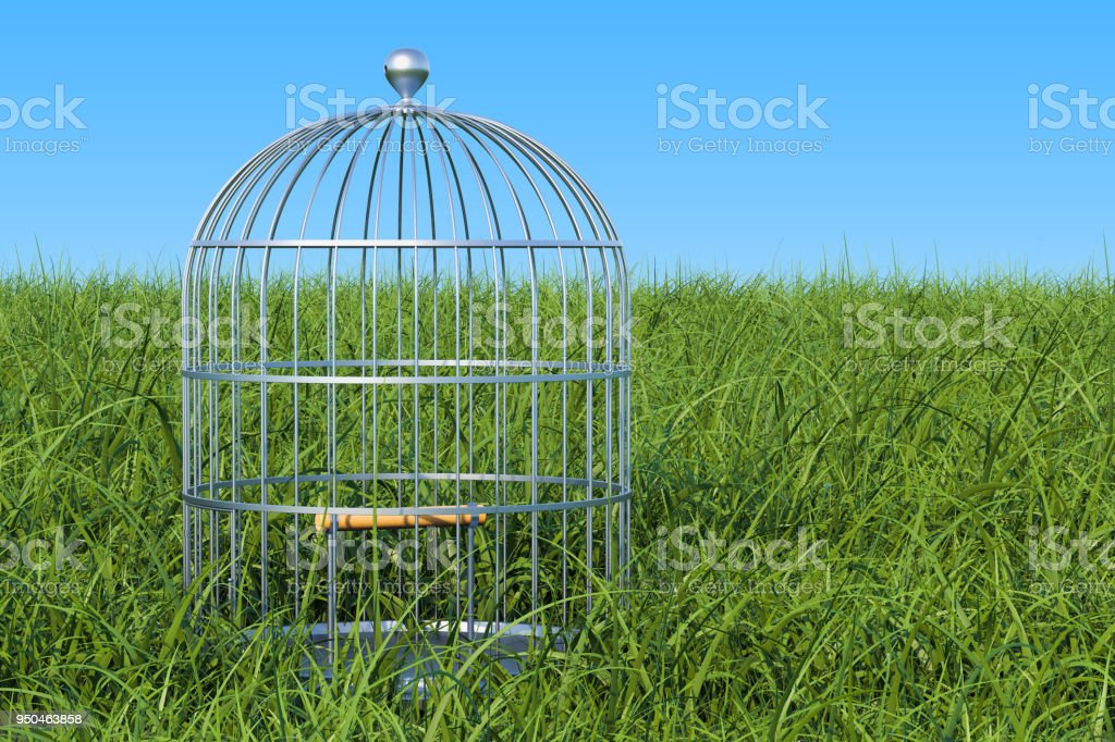 Bird cage in the green grass against blue sky, 3D rendering stock photo