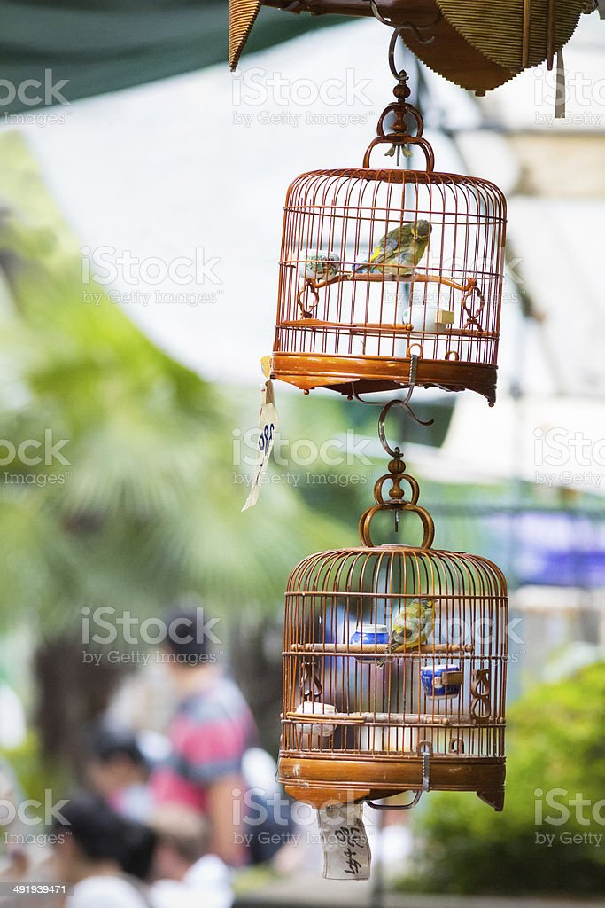 Bird cages hanging at street market stock photo
