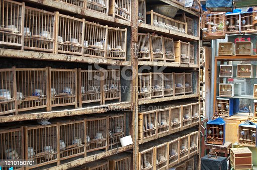 A stack of bird cages with life birds for sale in a wet market in Shanghai, China.