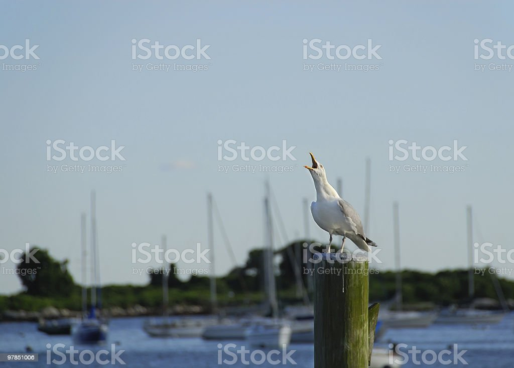 Bird Call royalty-free stock photo