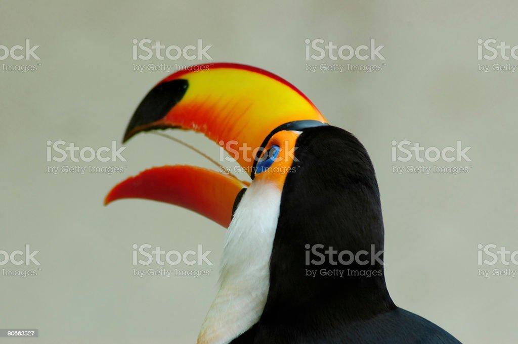 Bird close up royalty-free stock photo