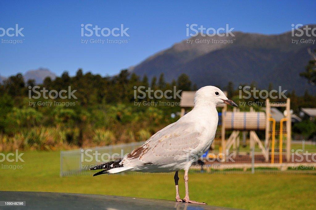 Bird close-up royalty-free stock photo