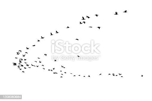 Bird cluster, isolated on white background